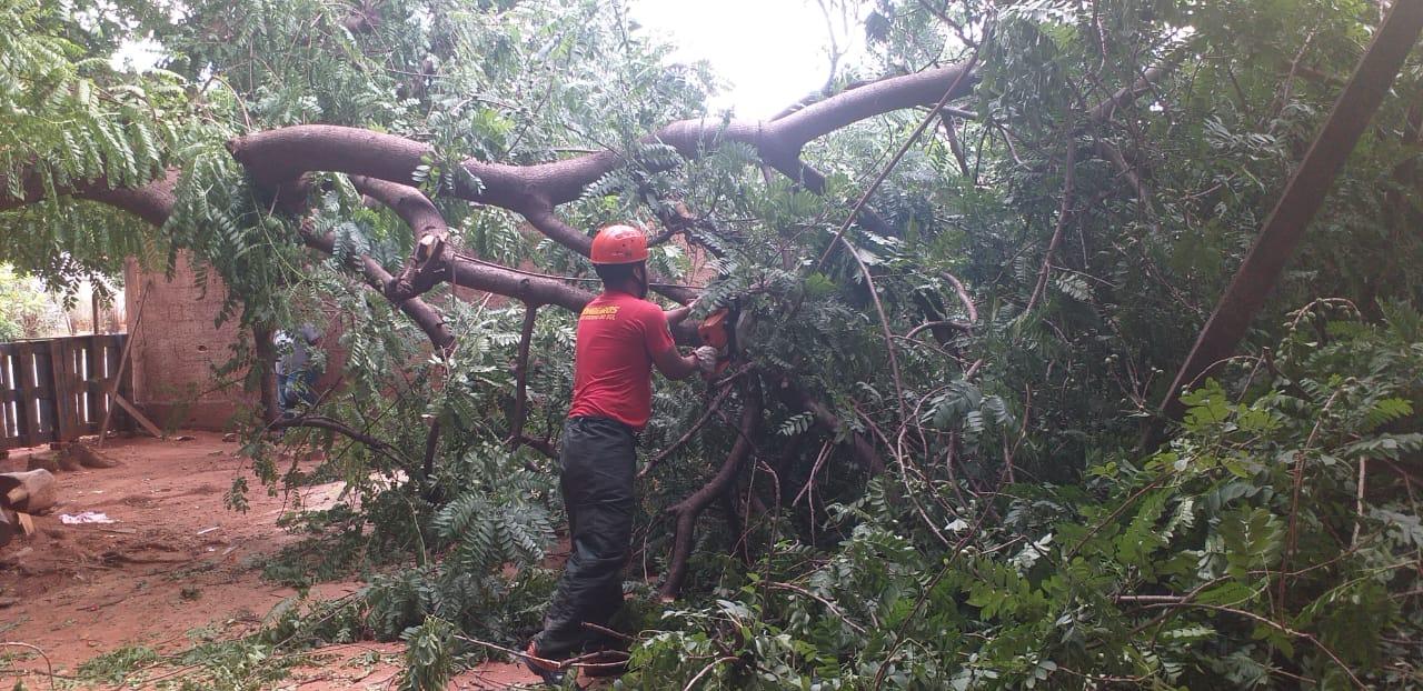 Bombeiros foram até o local para fazer a poda e retirada da árvore