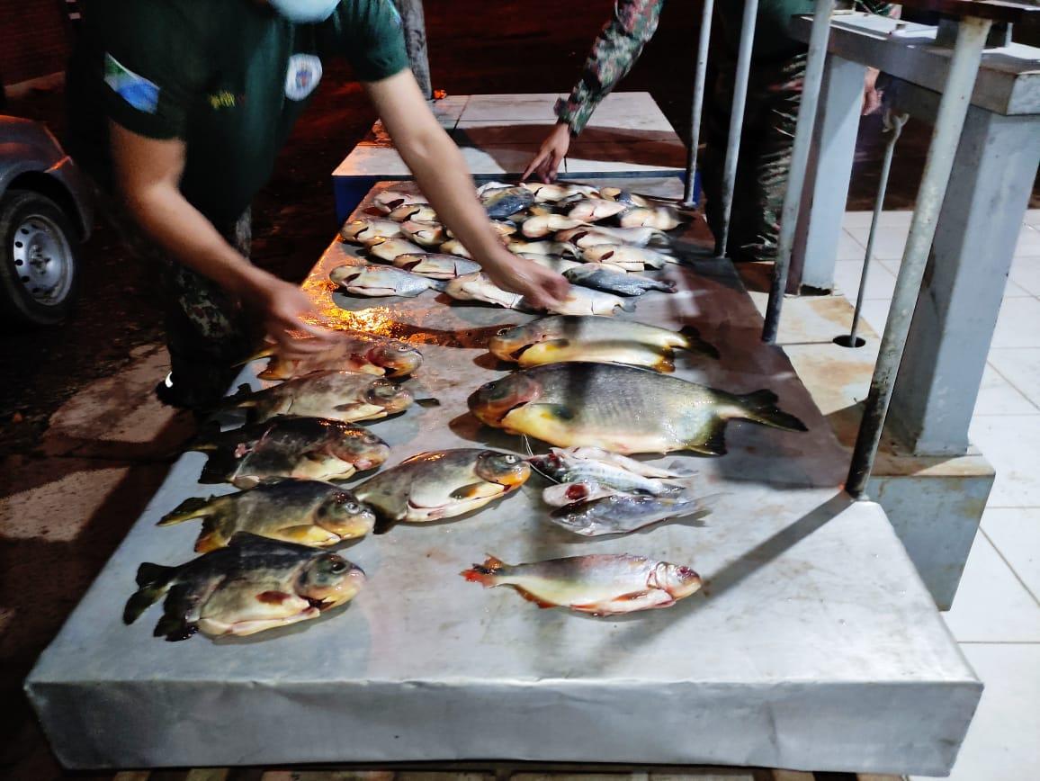 Pescado apreendido durante Operação