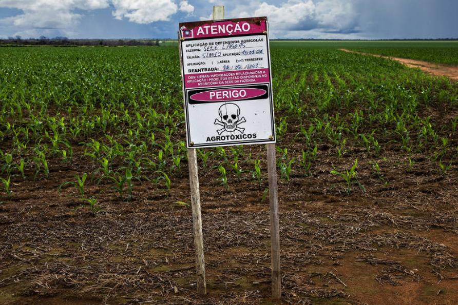 Placa sinaliza o uso de agrotóxico em plantação de milho próximo à APA (Área de Proteção Ambiental).