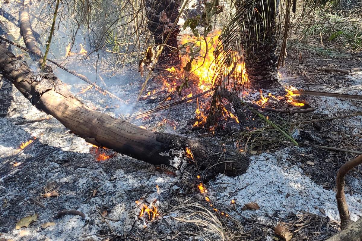Incêndios continuam em diversos pontos do Pantanal.