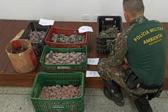 Os traficantes confessaram que as aves seriam comercializadas no Estado do Paraná.